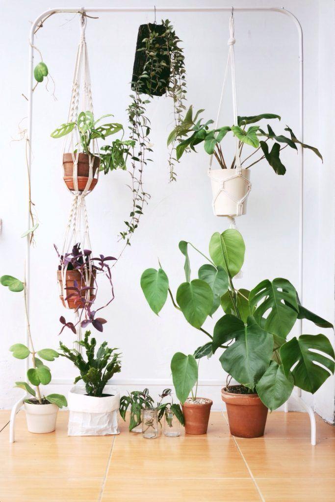 Indoor Plants Paradise At Home Living Loving For All Things Lovely Menanam Tanaman Dalam Ruangan Estetika Tanaman
