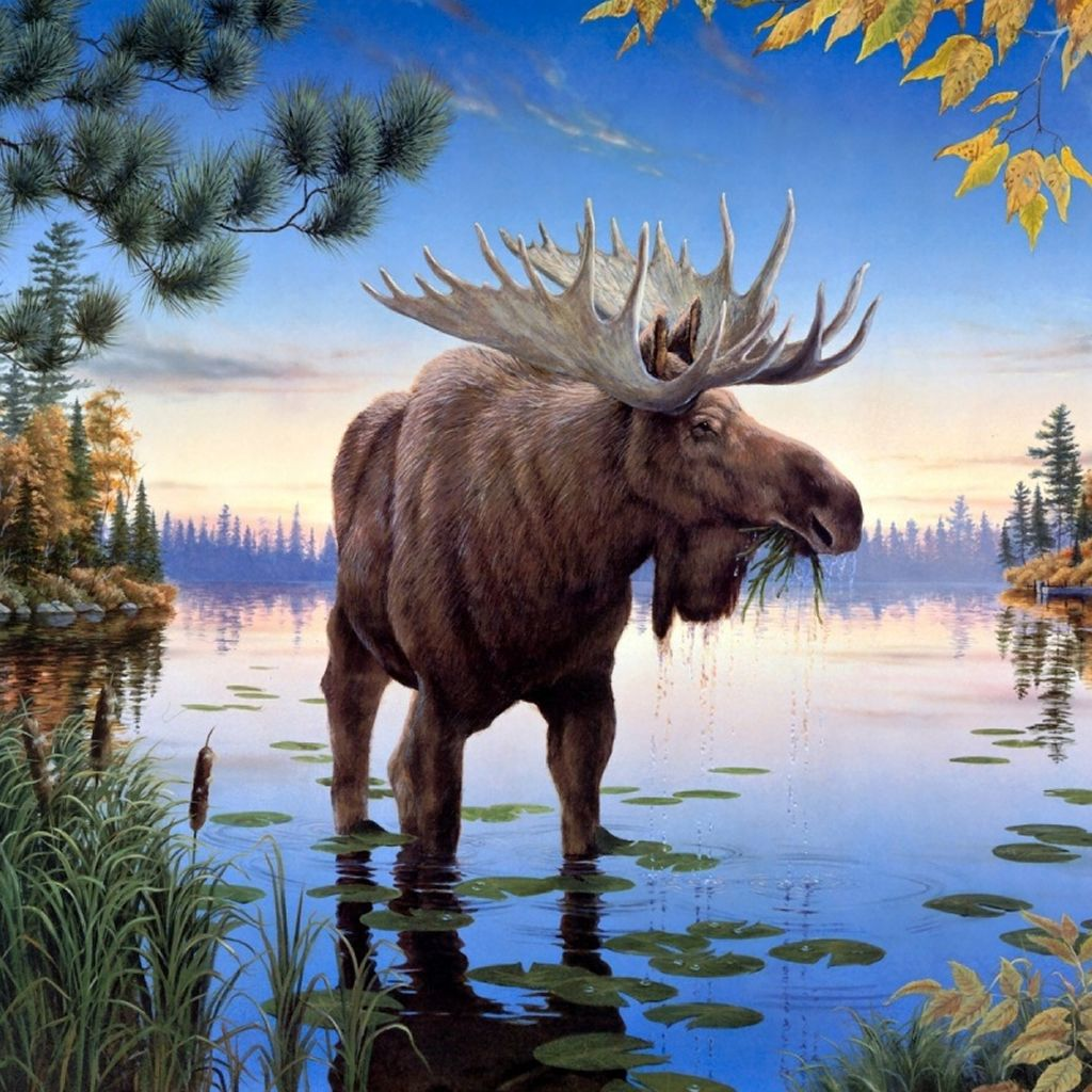 Moose Oil Painting Ipad Wallpaper Download Iphone Wallpapers Ipad Wallpapers One Stop Download Animals Beautiful Wild Animals Photos Animals Wild