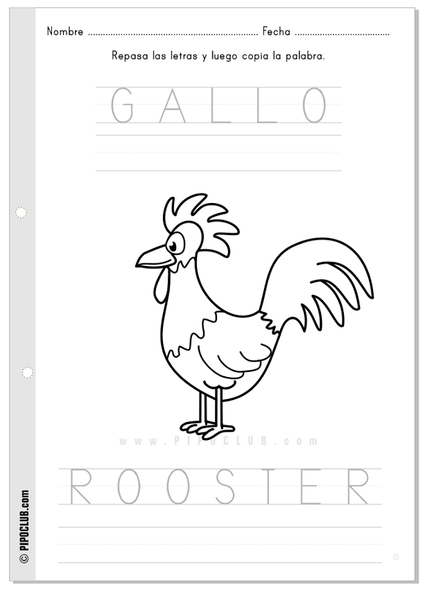Actividad Gallo Rooster #vocabulary #animals #worksheet #