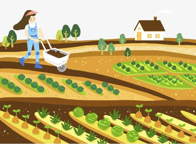 Cartoon Illustration Farm Land Vegetable Growing Farm Cartoon Drawing Scenery Cartoon Illustration
