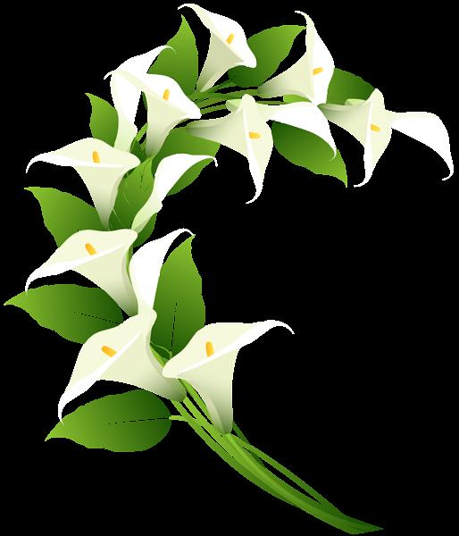 Calla Lily Decoration Png Clip Art Image Calla Lily Art Images Clip Art