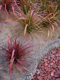 Resultado de imagen para plantas de sol para macetas