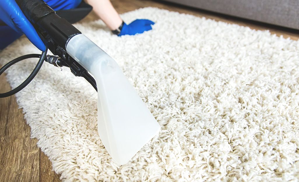 How to Clean a Shag Rug in 2020 Clean shag rug, Cleaning