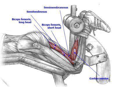 Anatomy of workout #18 Visit us: www.createasocialbuzz.com/the-buzz ...
