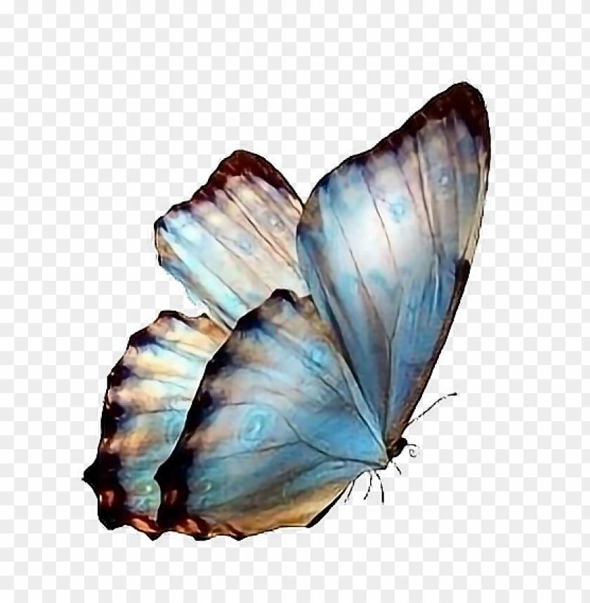 Follow Pedromartinx Butterfly Tumblr Animals Forest Transparent Background Butterflies Png Image With Transparent Background Png Free Png Images In 2021 Butterfly Background Transparent Wallpaper Transparent Background