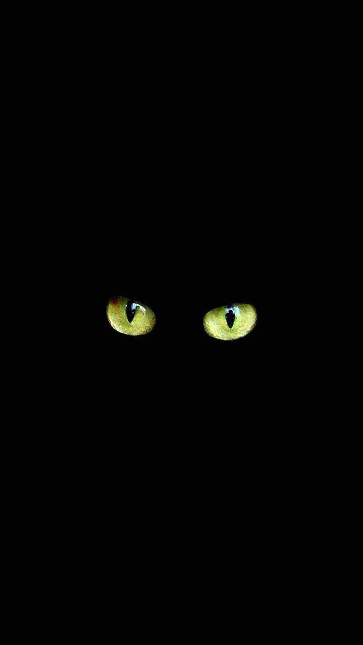 Fondos para whatsapp buscar con google fondos pinterest papis de parede para celular de gatos esse post especial para voc que apaixonado pelo seu bichinho de quatro patas em especial gatos eles so lindos altavistaventures Images