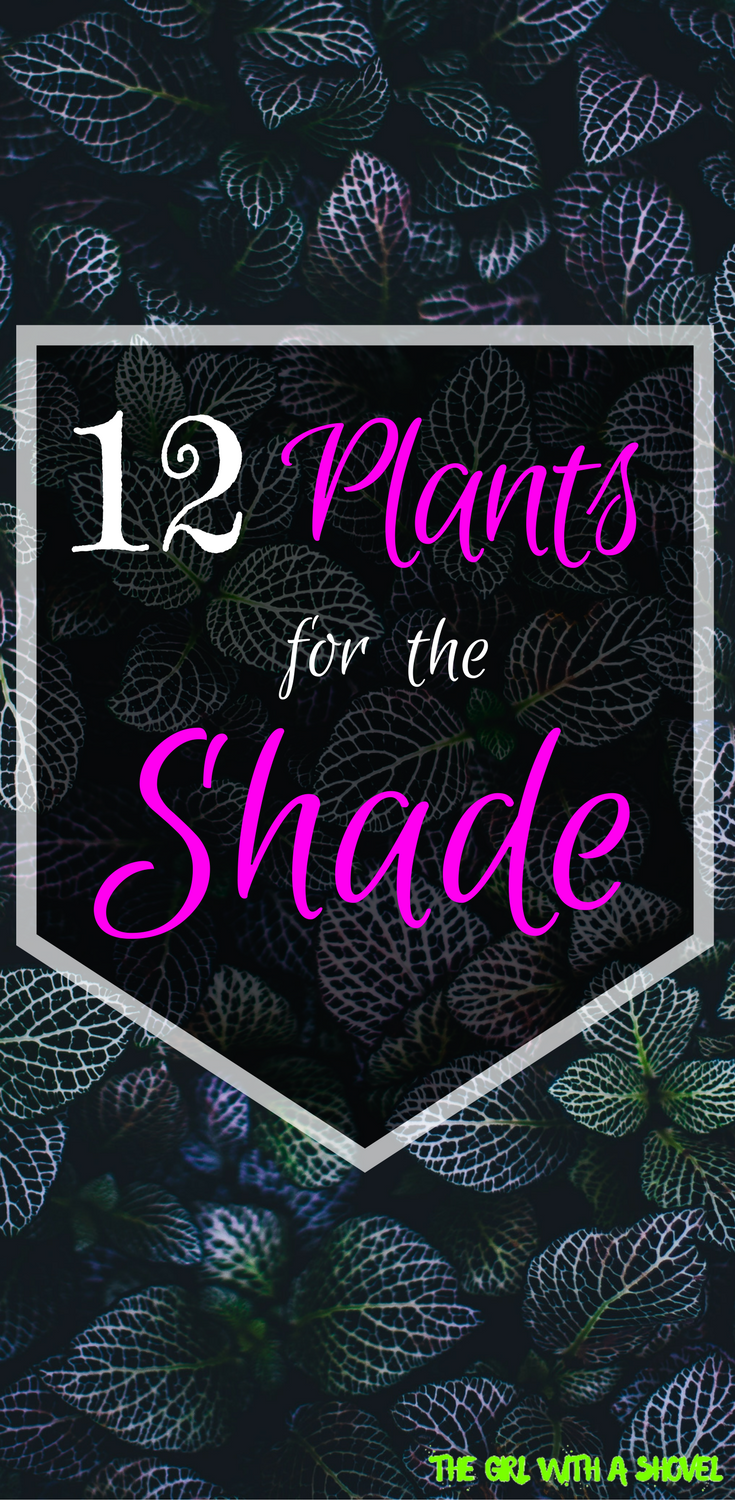 Best Plants for the Shade Outdoor Plants Pinterest Shade