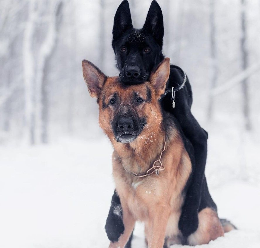 200 Dog Names That Start With E Cutepicturespuppies Dog Names Best Dog Names Cute German Shepherd Puppies