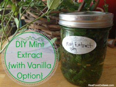 DIY Mint Extract {with Vanilla Option}