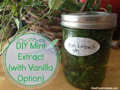 DIY Mint Extract {with Vanilla Option}