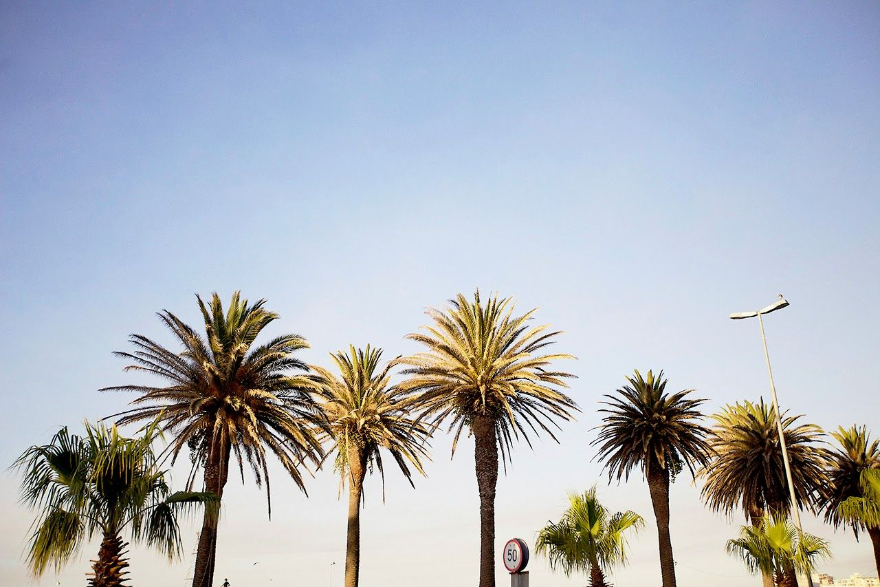 California Tumblr Photography Palm Trees Hd Pictures 4 HD Wallpapers