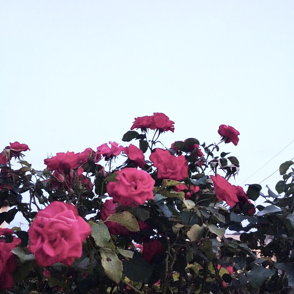 Tragedy Is A Comedy Misunderstood Shakespeare Quotes Roses