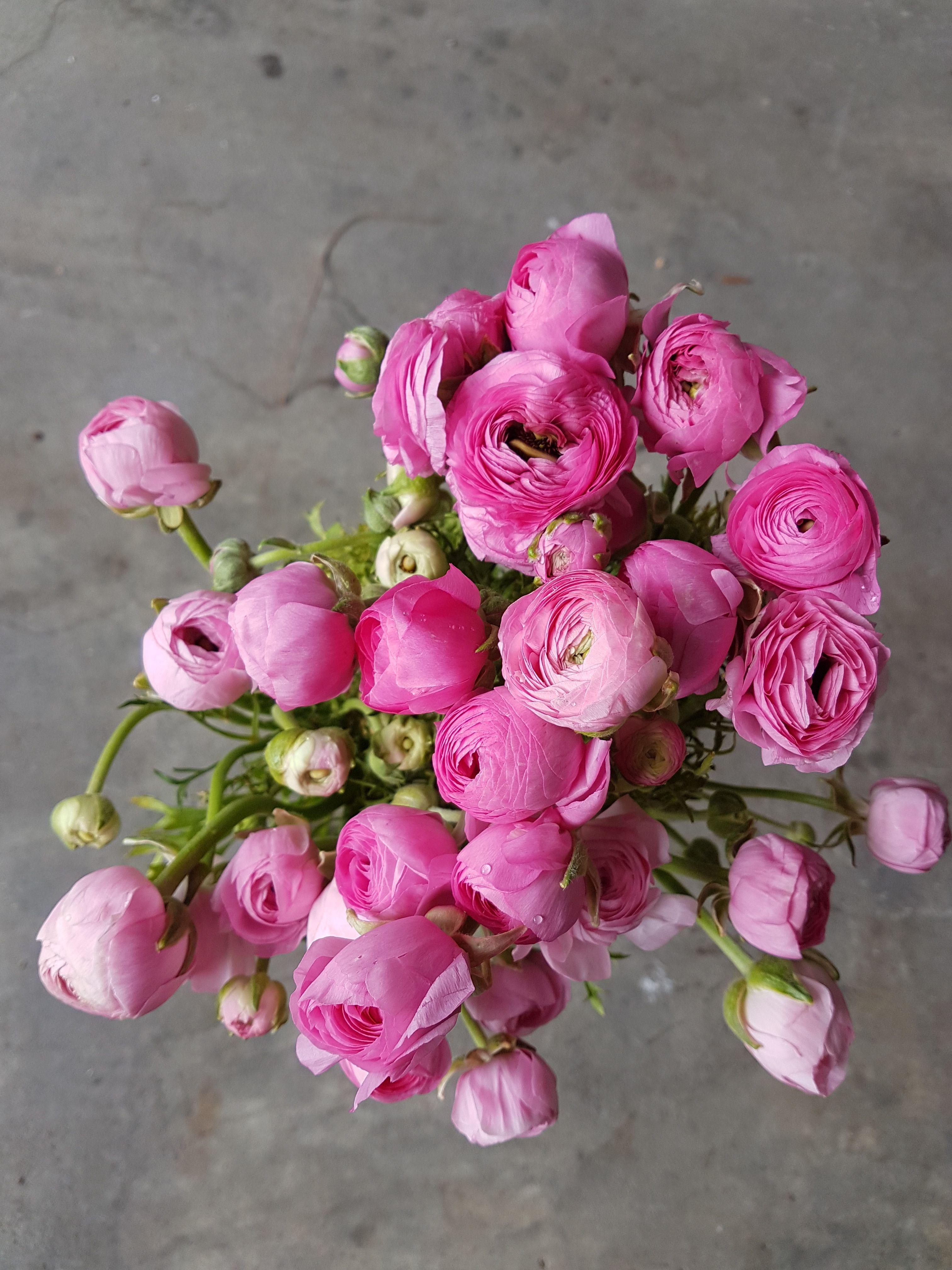 Is It Still Ranunculus Season Www Jademcintoshflowers Com Au