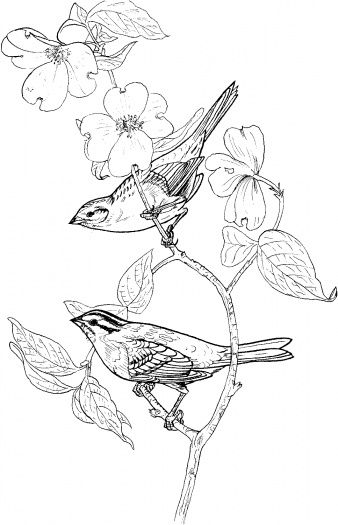 Sparrows In A Flowered Branch Bird Coloring Pages Bird Drawings
