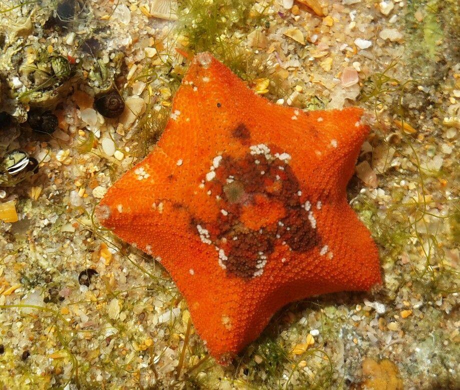 pin von angelika henne auf korallen zeichnen  korallen