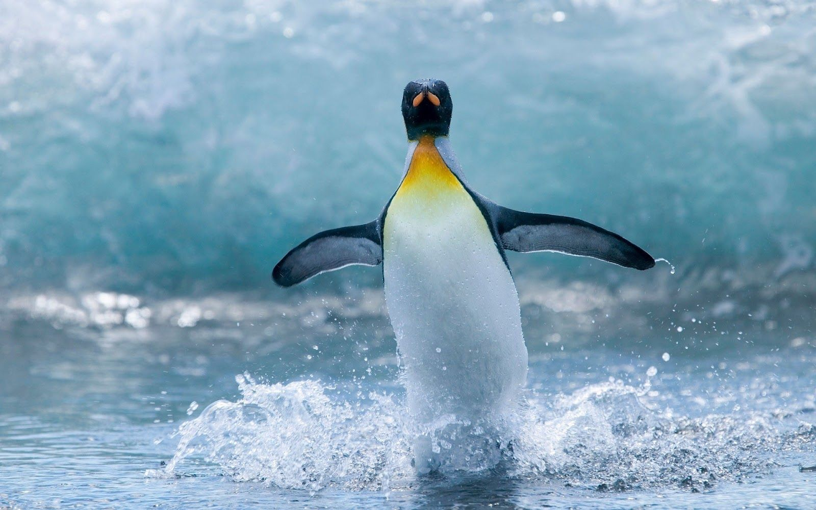 Cute penguins cute mighty pictures - Penguin Wallpapers Emperor Penguinsfunny
