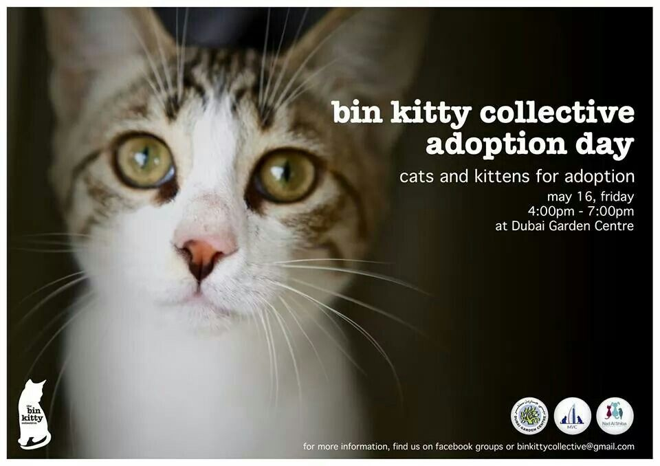 All Catlovers In Dubai Uae Bin Kitty Collective Adoption Day On May 16 2014 4pm To 7pm At Dubai Garden Center Kitten Adoption Adoption Day Cat Adoption