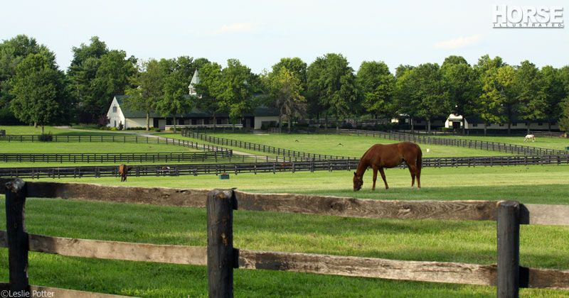 5 Best Types Of Fencing For Horse Farms Horse Farms Horse Fencing Horses