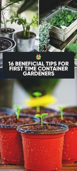 Ve able garden · 16 Beneficial Tips for First Time Container Gardeners