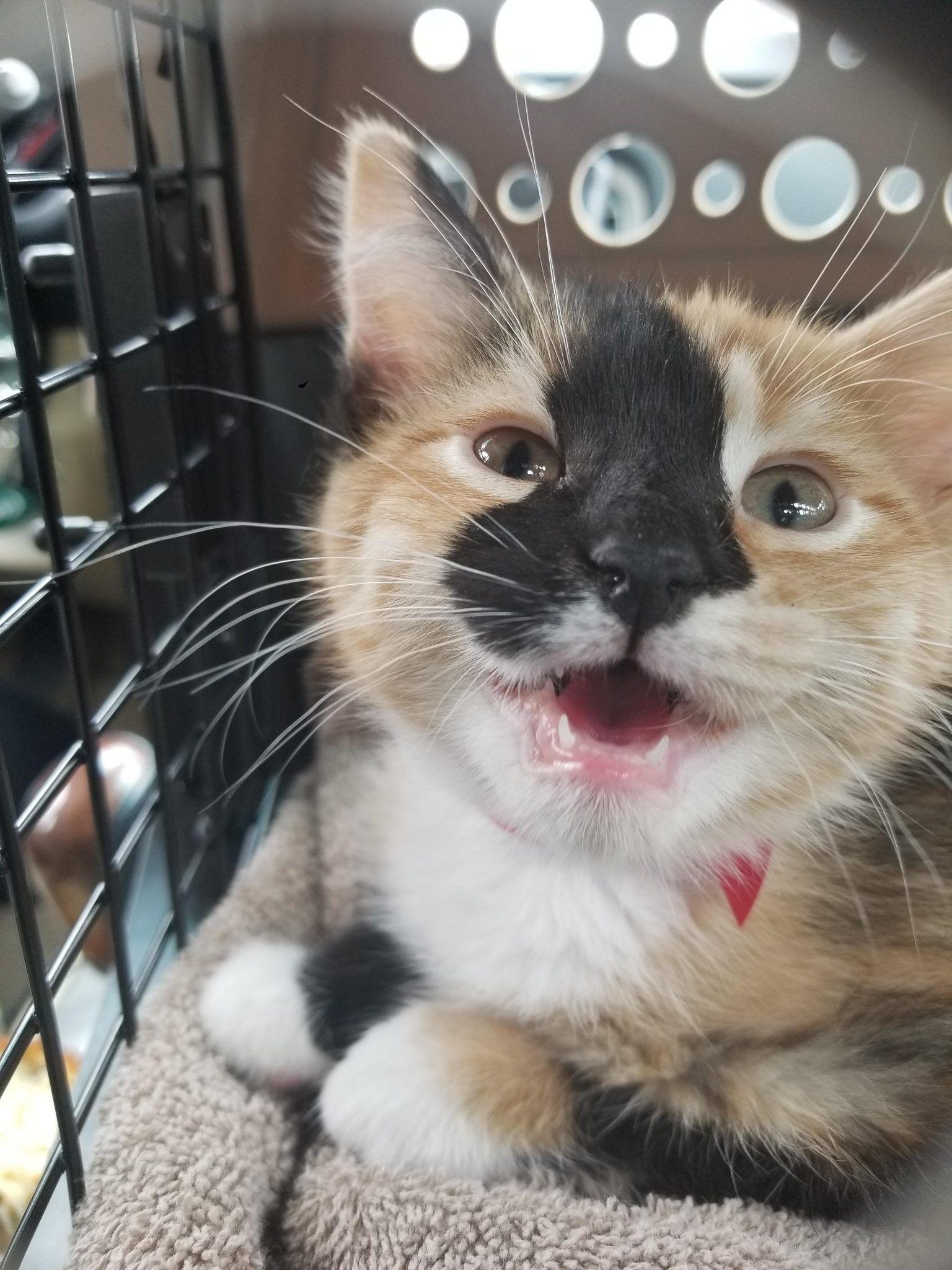 This Is Polly Gatos Cats Gatos Gatos Bellos
