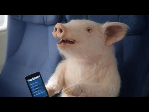 Maxwell The Geico Pig Is On A Plane Brand New Geico Piggy Commercial Funny Commercials Old Commercials Make You Smile