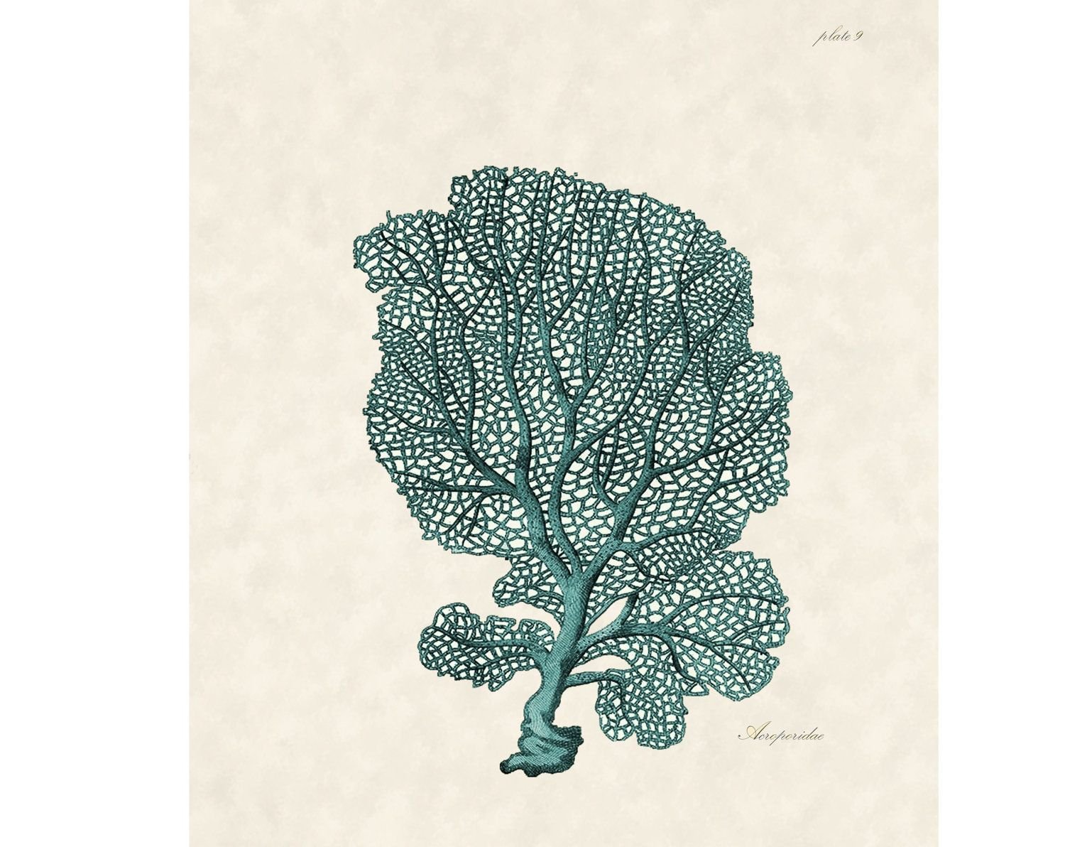 Beach Decor Coral illustration Coral Print for by BeachArtDesigns, $10.00