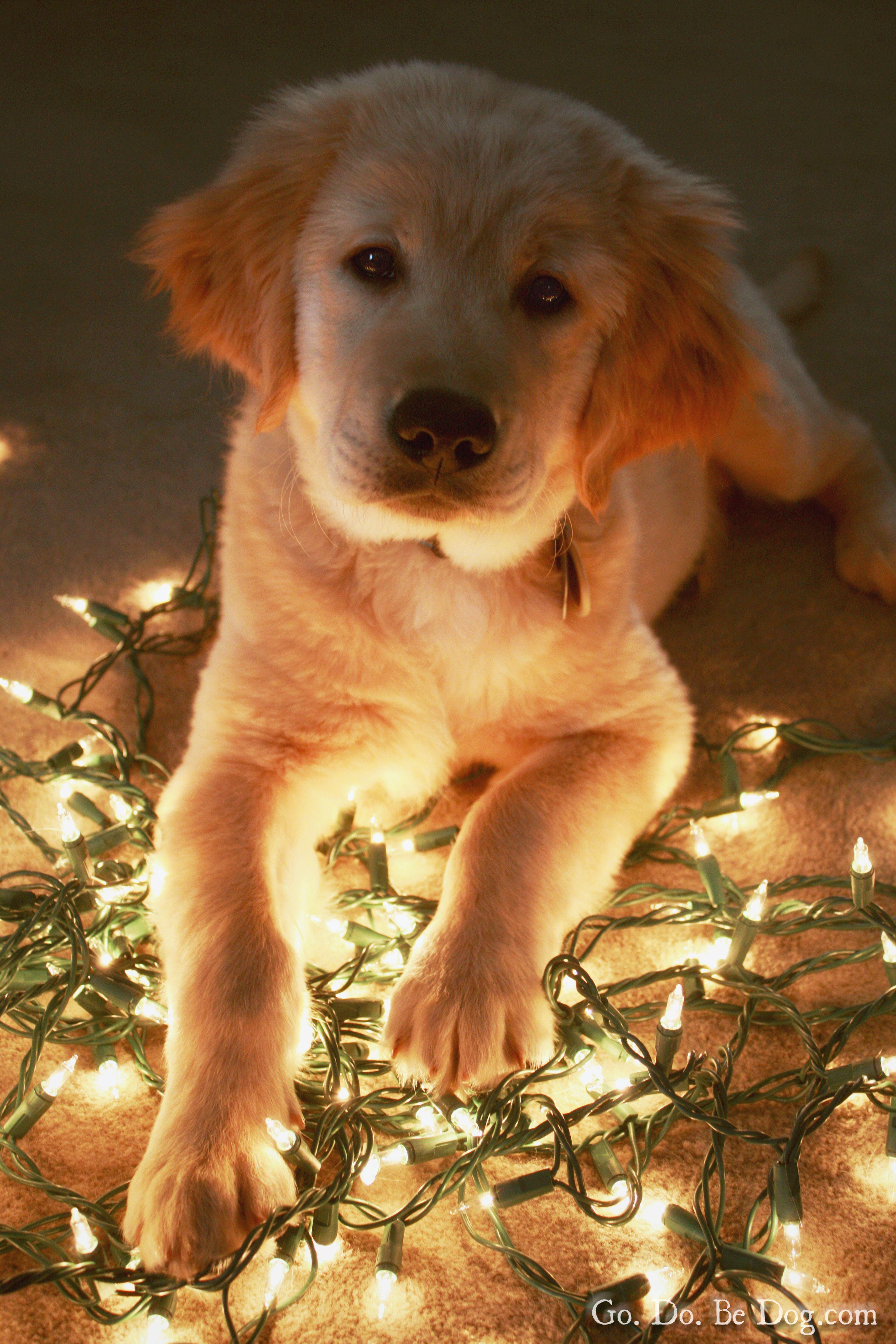 Puppy glow