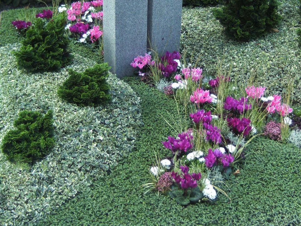 Grabbepflanzung Grabneuanlage Und Grabpflege In Mainz Blumenhaus Smedla Grabbepflanzung Bepflanzung Grabpflege