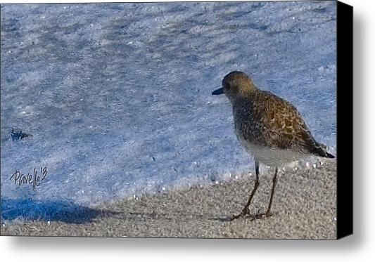Just A Little Bit Closer - Asilomar State Beach Stretched Canvas Print / Canvas Art By Jim Pavelle