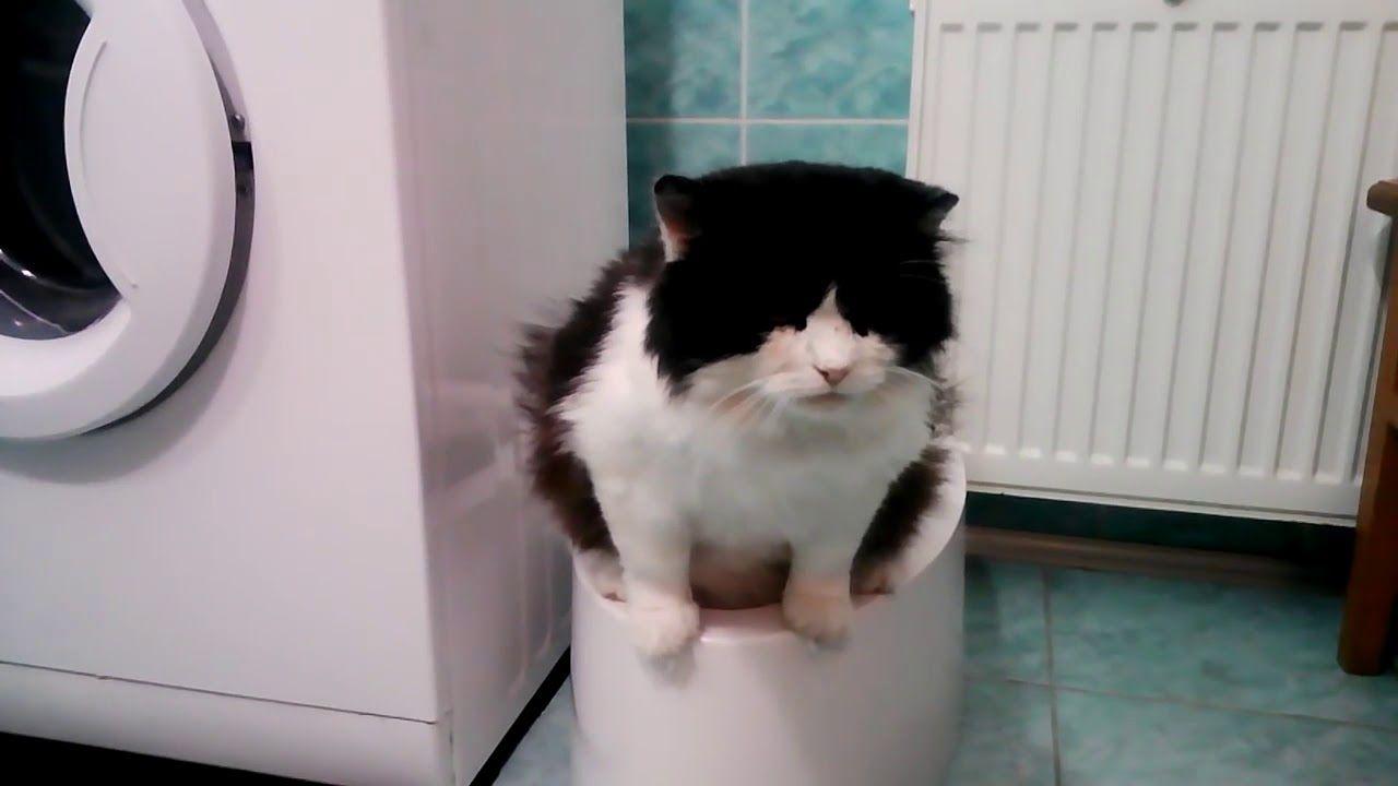 Modernes Katzenklo Der Neue Trend Für Katzen Und Kleine Hunde You