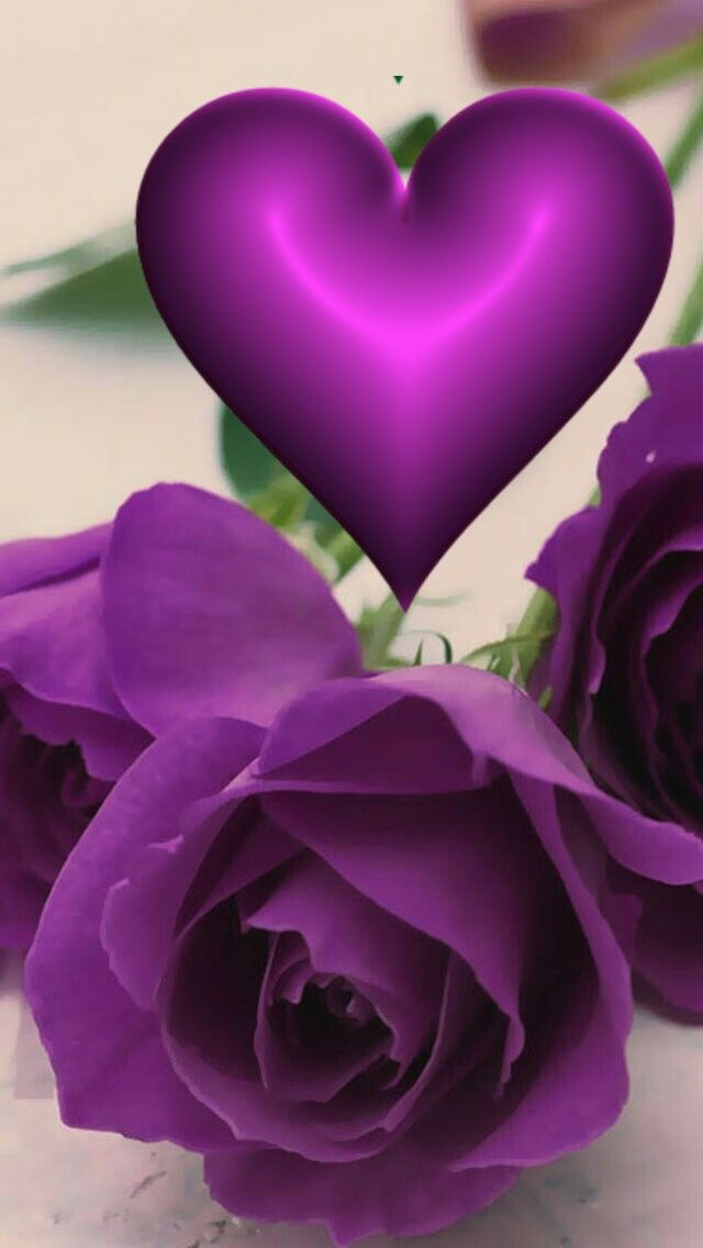 Purple Flowers Wallpaper Purple Wallpaper Iphone Purple Roses Flower wallpaper love photo