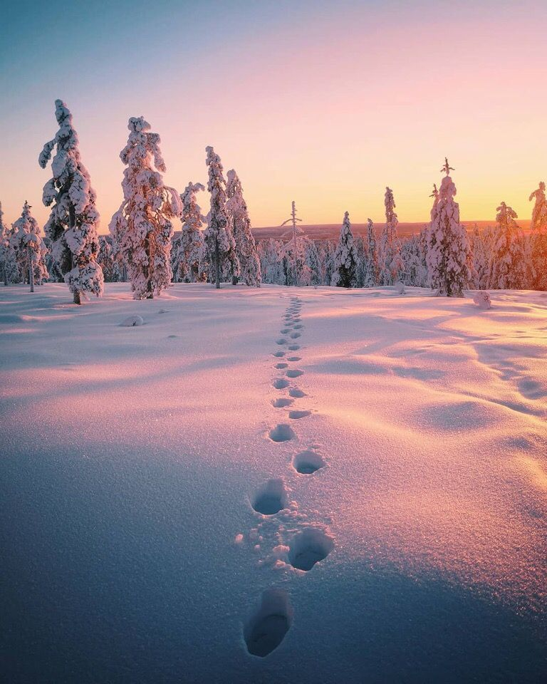 Snow Winter Forest Nature Photography Sunset Footprints Winter Landscape Photography Winter Landscape Landscape Photography Nature