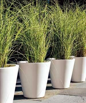 7 Ideas for Container Gardens -   18 plants Outdoor grasses ideas