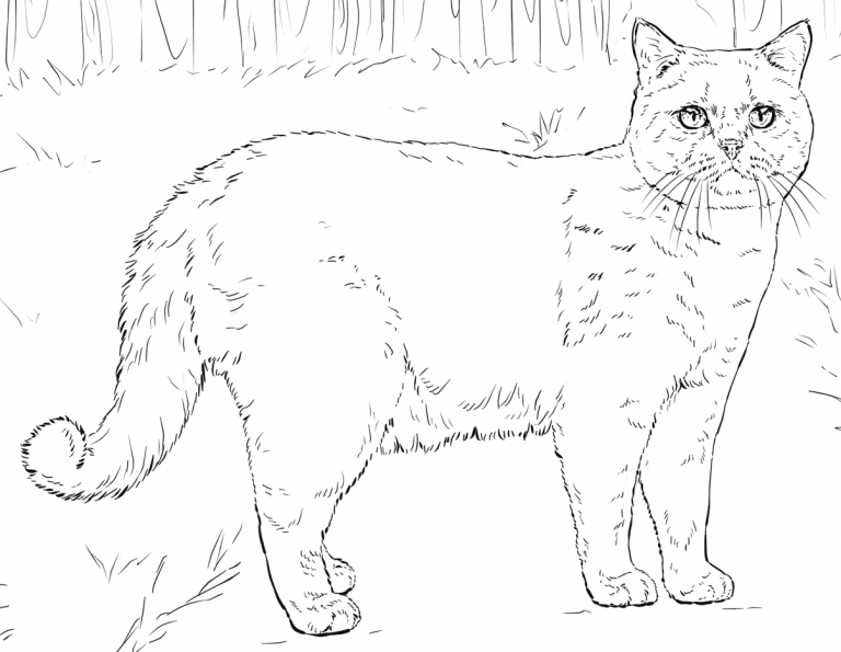 Cat Coloring Pages For Adults Best Coloring Pages For Kids Cat Coloring Page Cat Coloring Book Animal Coloring Pages