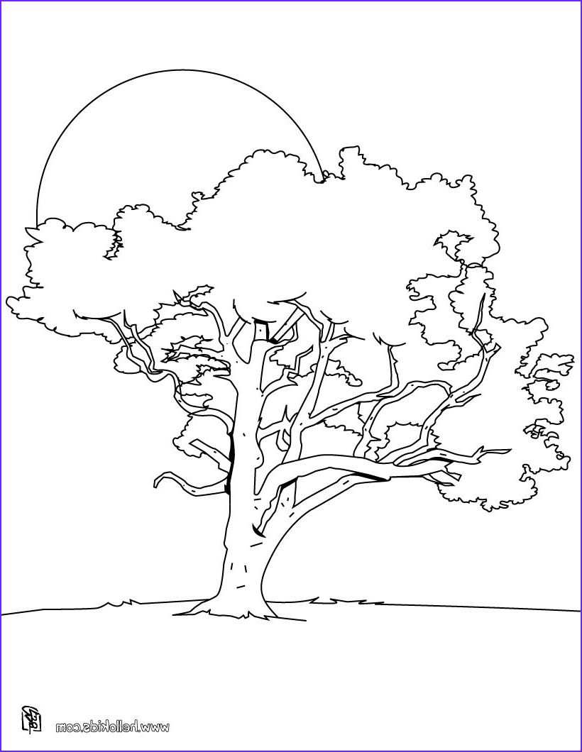 15 Beautiful Tree Coloring Pages Gallery In 2020 Tree Coloring