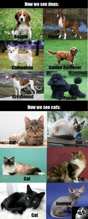 How we see dogs. Pinned From Junglegag - Click for more!