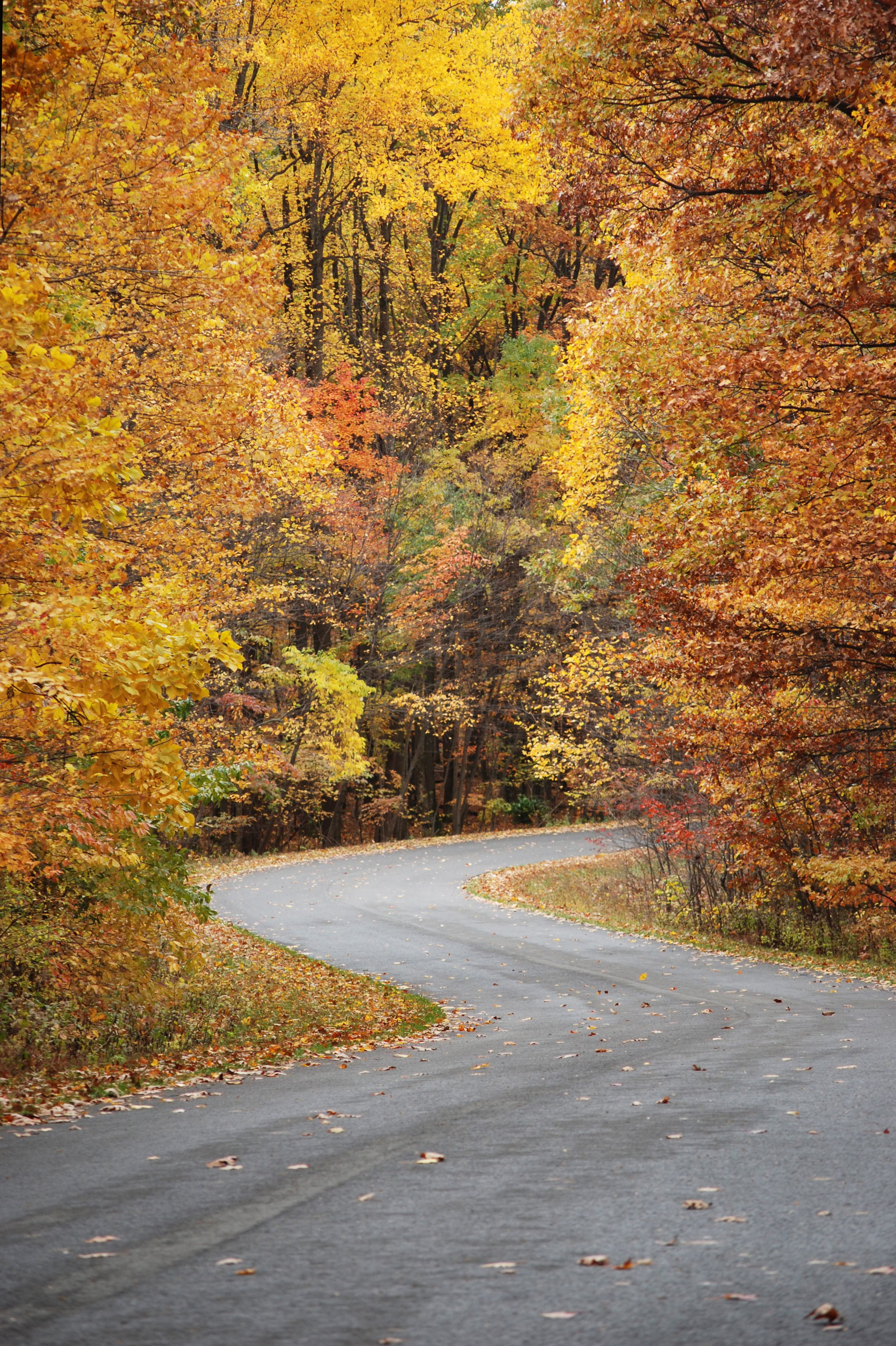 Pin By Nelda Kelough On Road Trips Morgantown West Virginia Country Roads Take Me Home State Parks