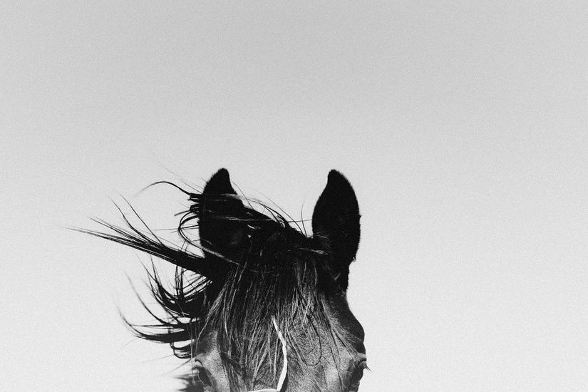 Victoria aguirre photographer pampa horses