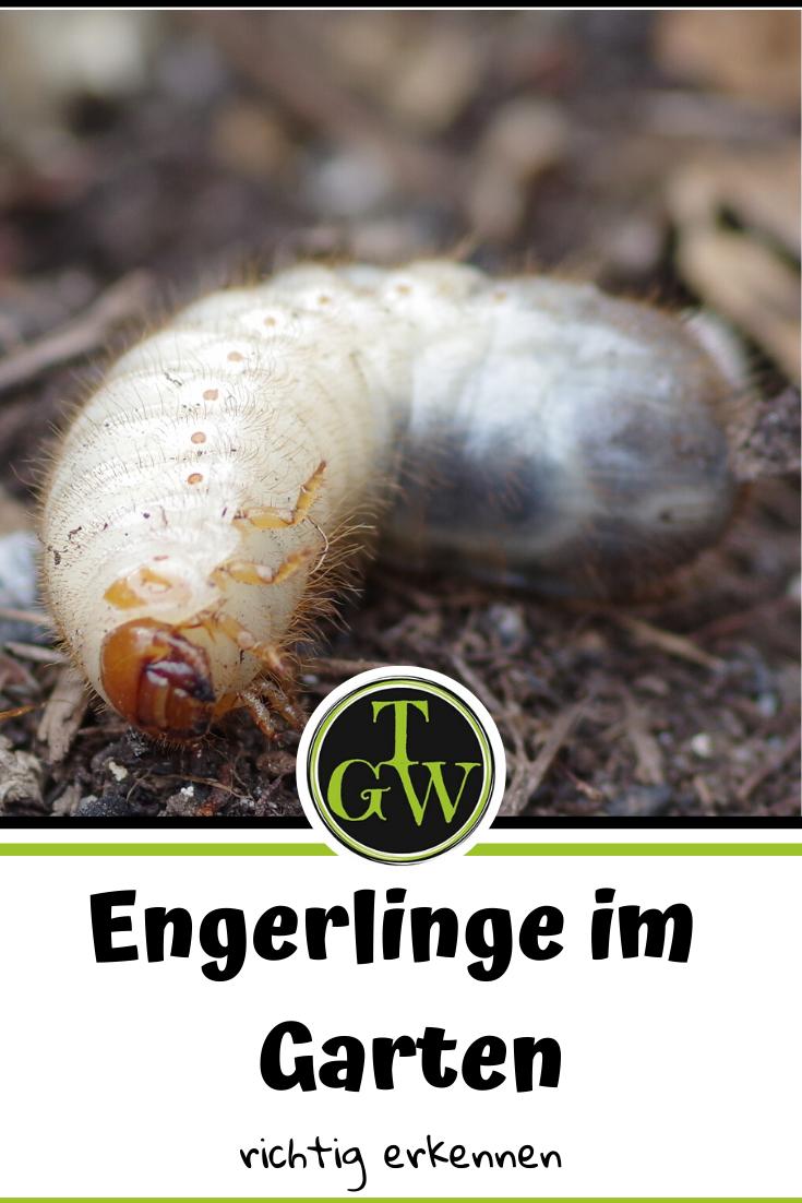 Pin Auf Garten Topfgartenwelt