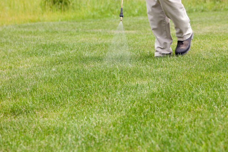 How To Get Rid Of Crabgrass For Good Weeds In Lawn Bermuda