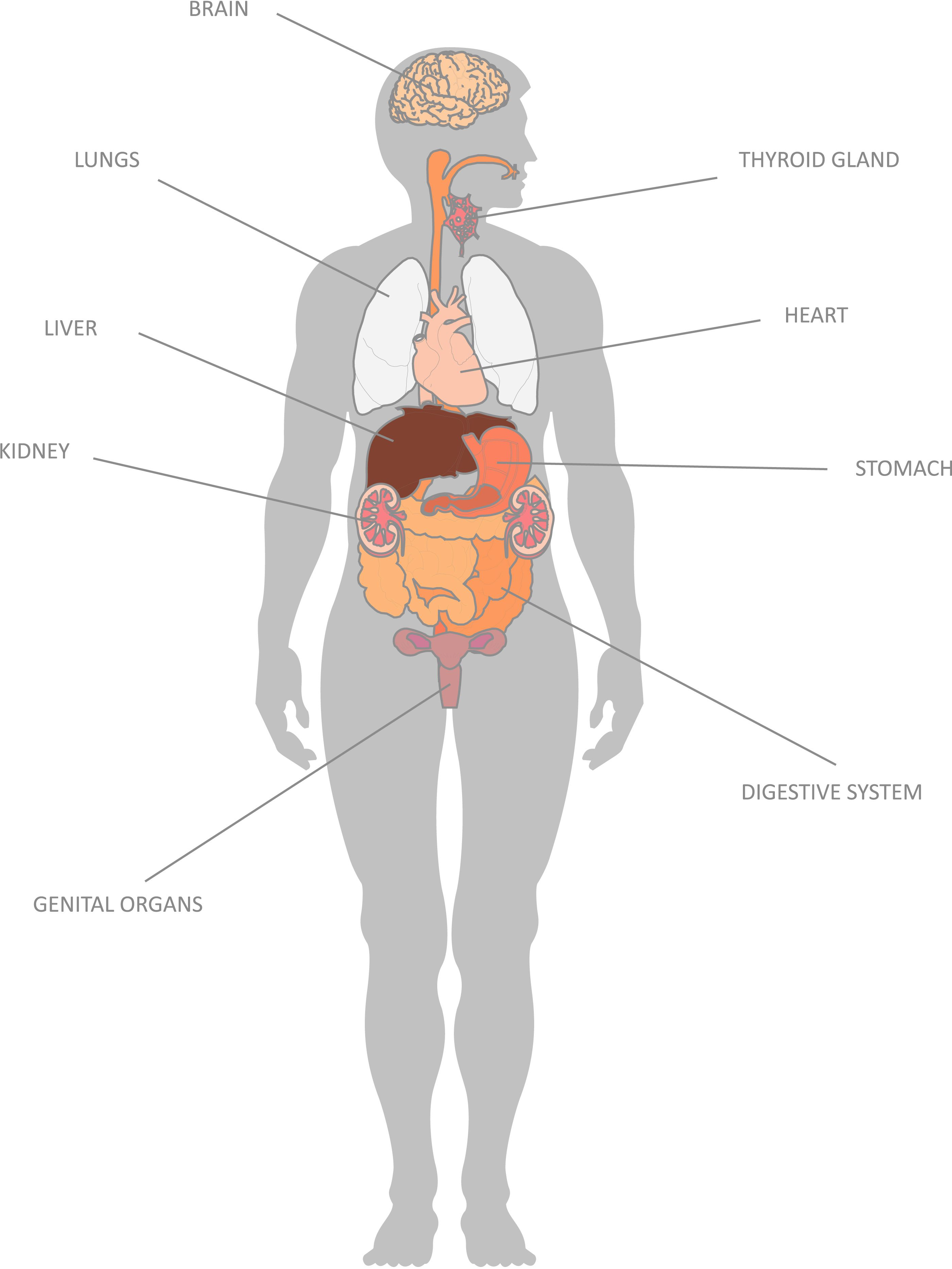Having Map of Internal Organs to Understand Human Body | Anatomy of ...