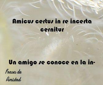 Frases De Amistad En Latin Frases De Amistad Dichos De