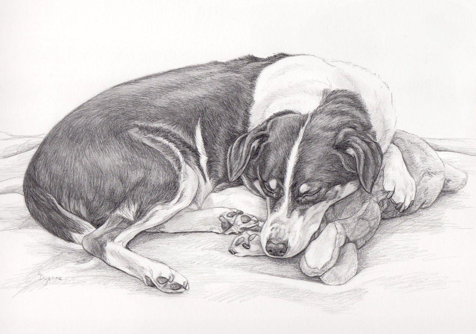 Potlood Tekening Van Jari Honden Portret In Grafiet Door Dyenne Nouwen Dieren Tekenen Hond Tekeningen Honden Portretten