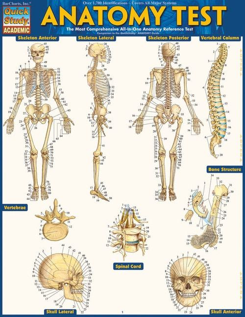 Anatomy Test (9781423223542) | Massage | Pinterest | Anatomy and ...