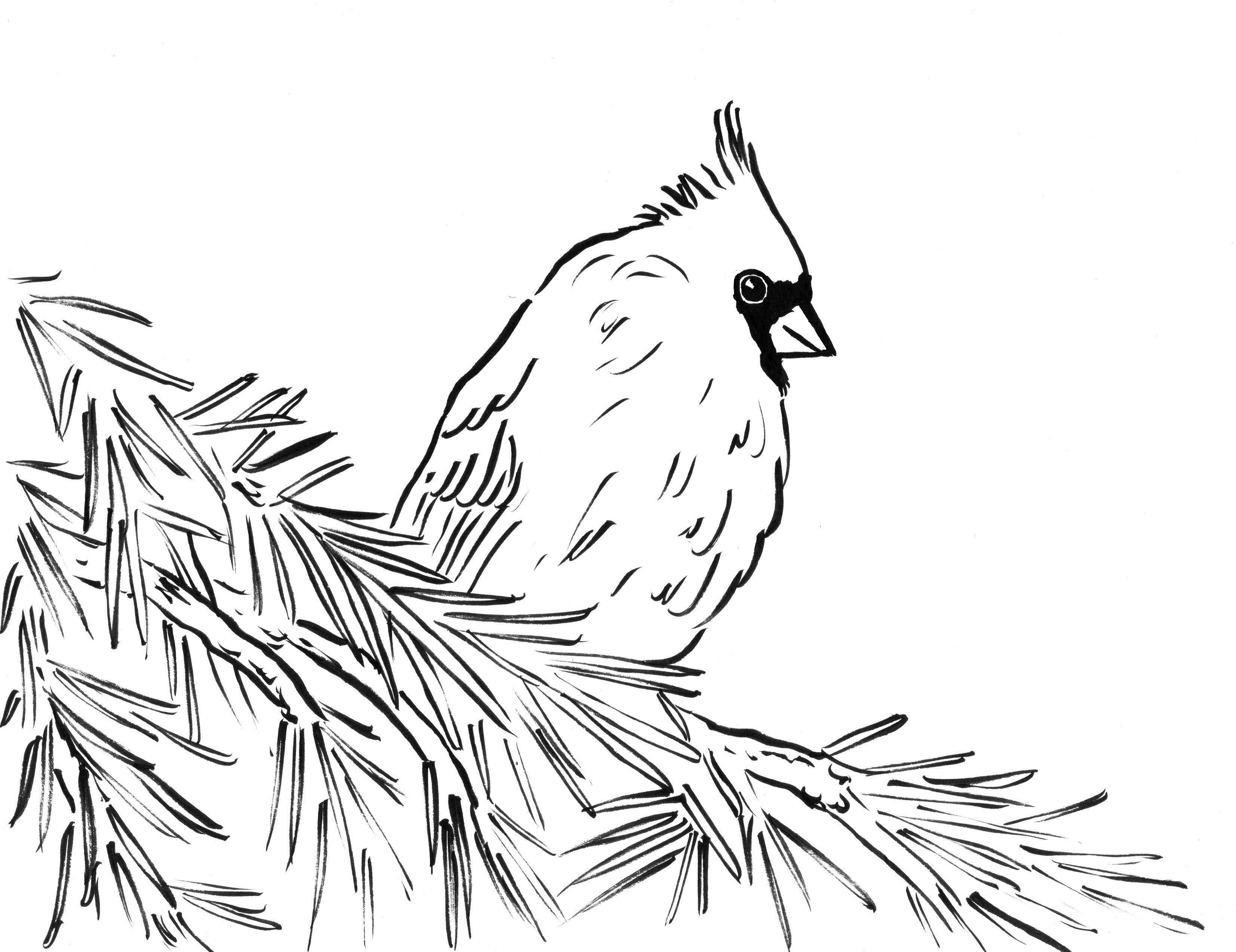 Coloring Pages Red Bird New Northern Cardinal Red Bird Coloring Page Pages Cardinals 7 Bird Coloring Pages Monster Coloring Pages Animal Coloring Pages