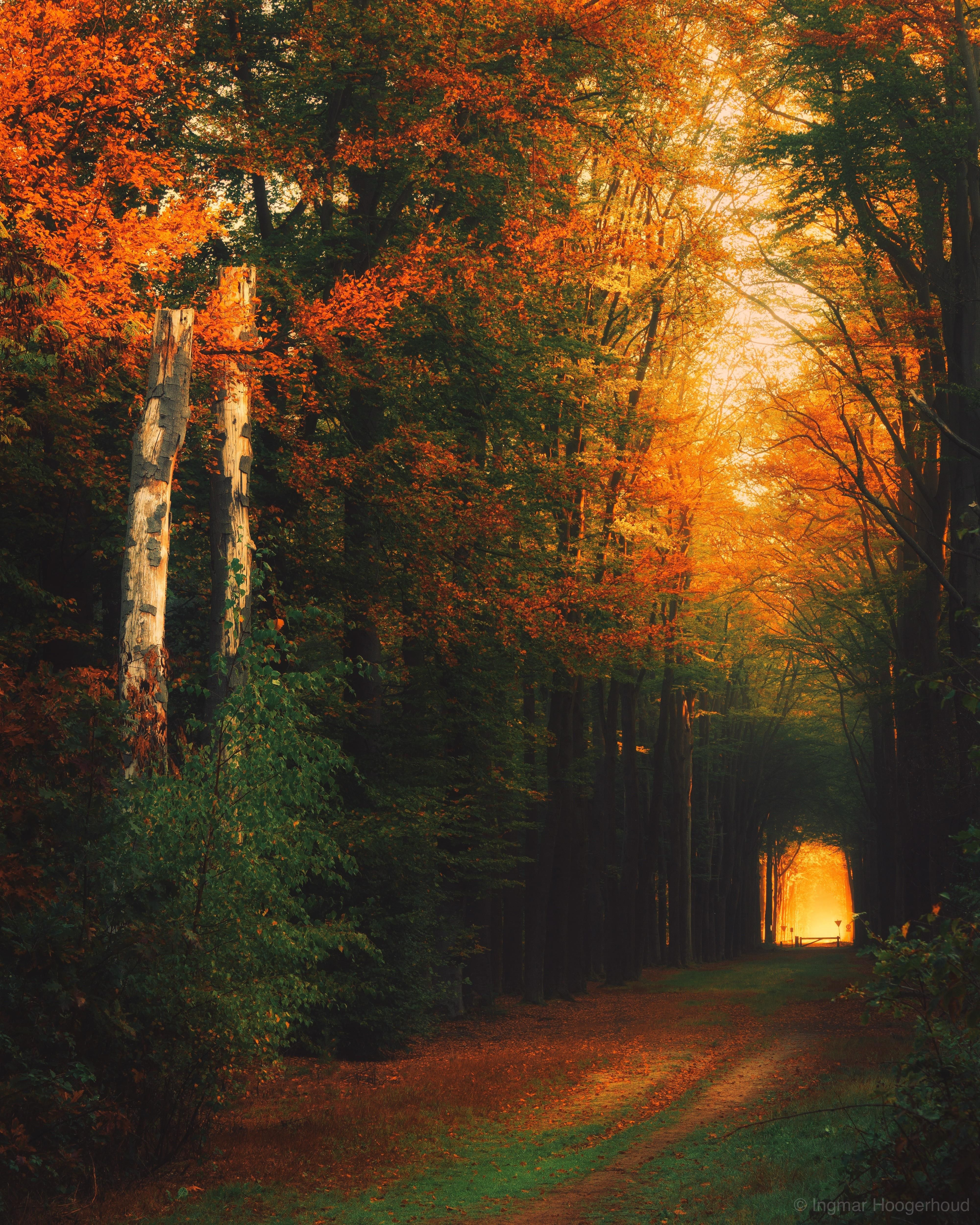 Autumn Forest Doetinchem Netherlands 4000x5000 Autumn Landscape Forest Photography Autumn Forest