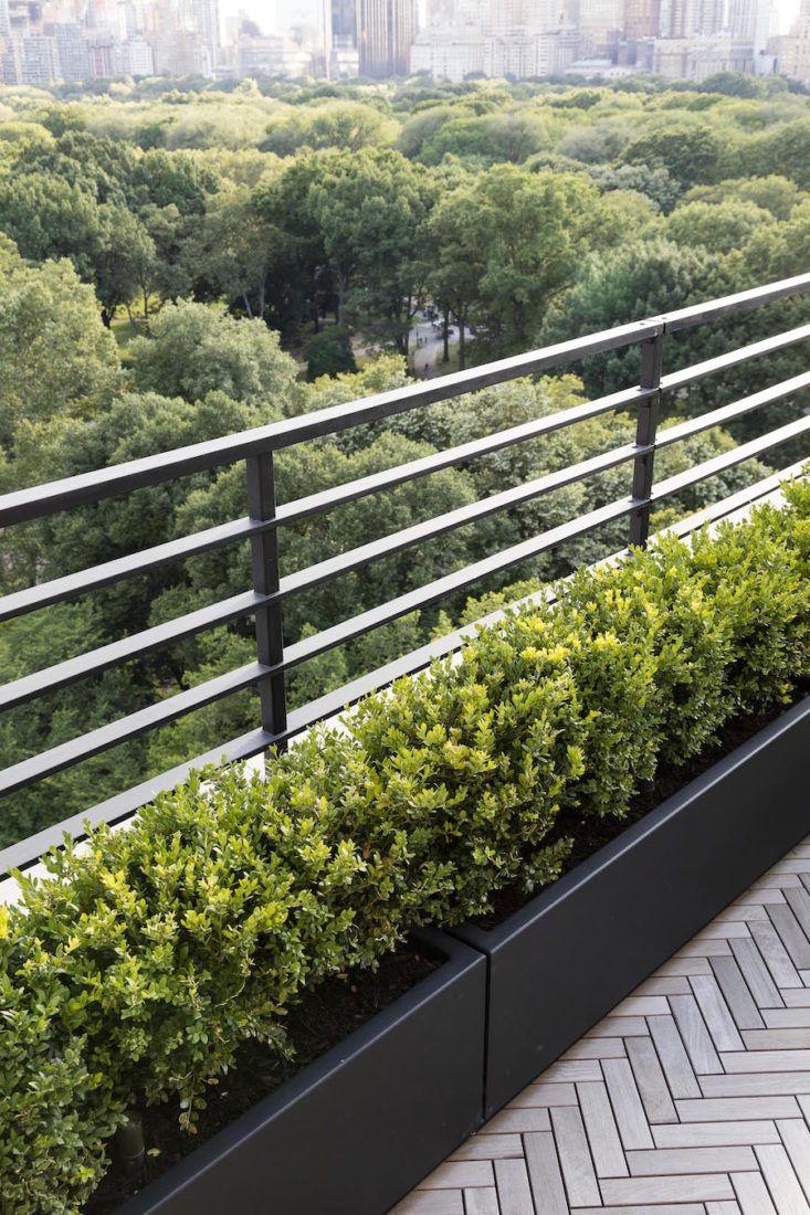 Photo of Garden Designer Visit: A Manhattan Terrace with Panoramic Central Park Views – Gardenista