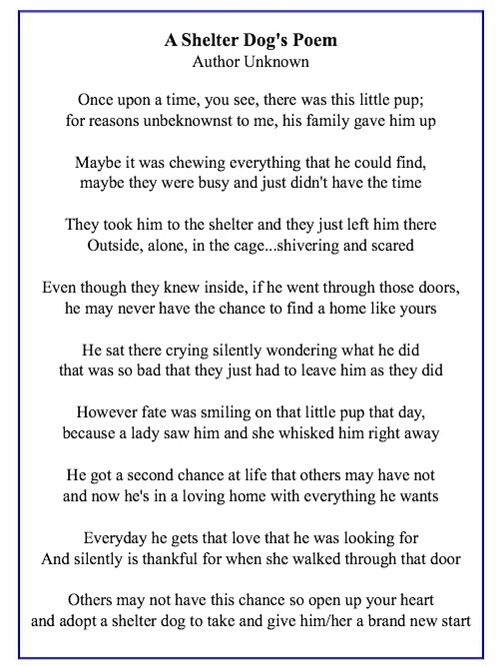 Pin By Dianna Lopez On Dogs And A Few Others Rescues Dog Poems Pet Poems Shelter Dogs