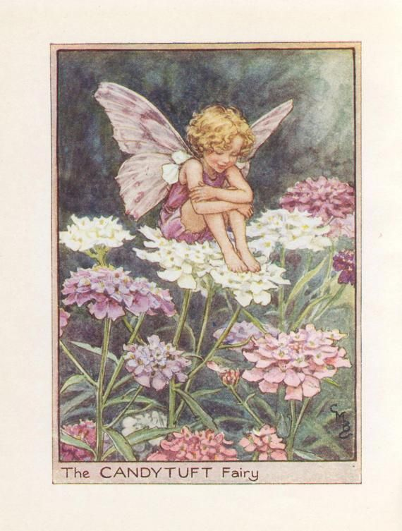 Photo of Flower Fairies: THE CANDYTUFT FAIRY Vintage Print c1930 by C…