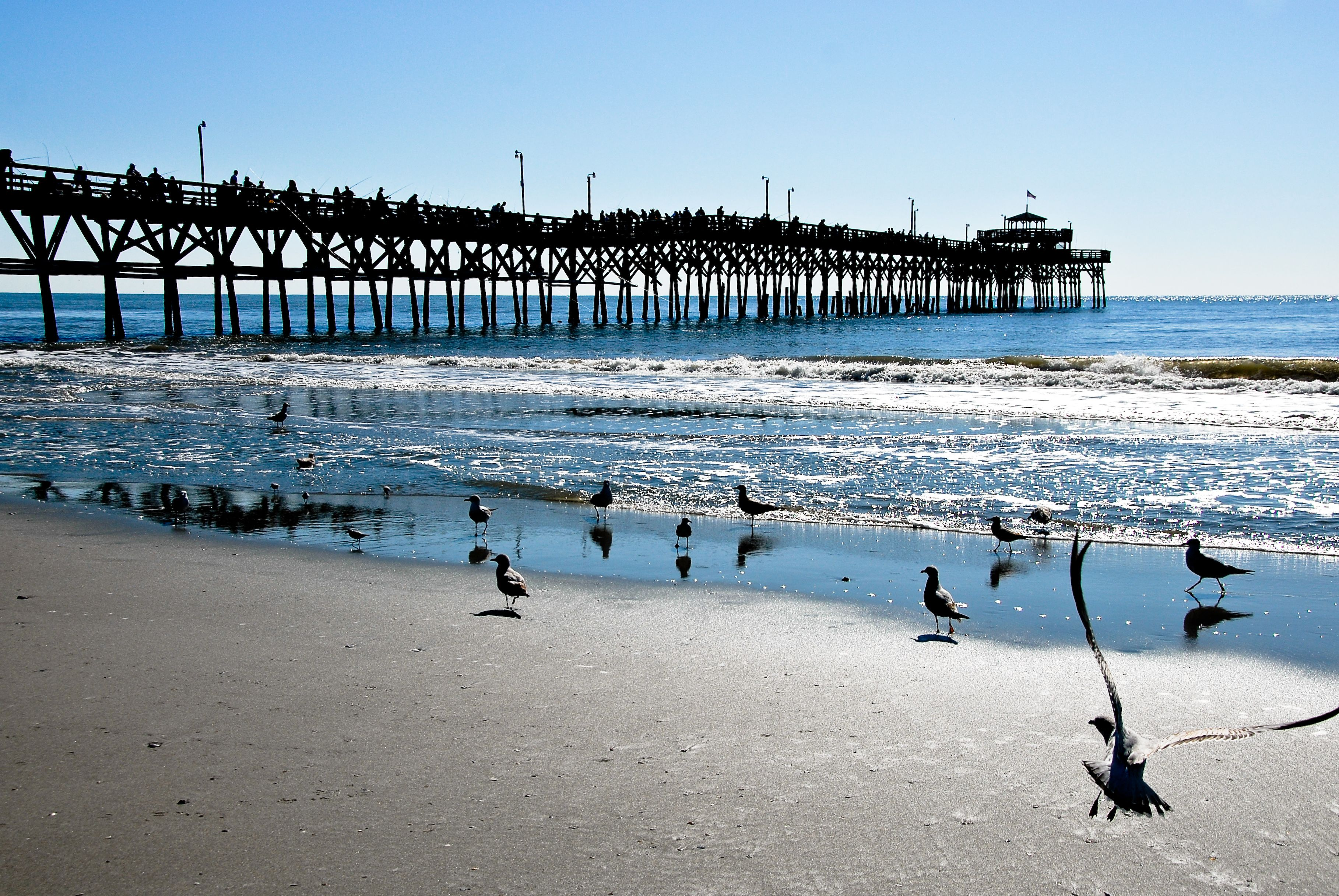 A Beautiful Flock Of Seagulls At The Cherry Grove Pier In North Myrtle Beach South